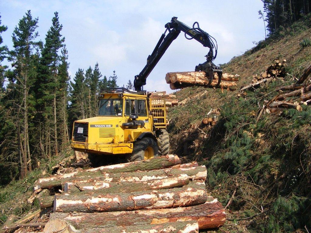 Explotaci n forestal maderas jos saiz s l for La beta de la madera
